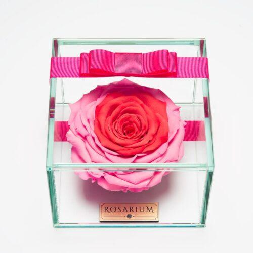 1 darabos pink örök rózsa doboz